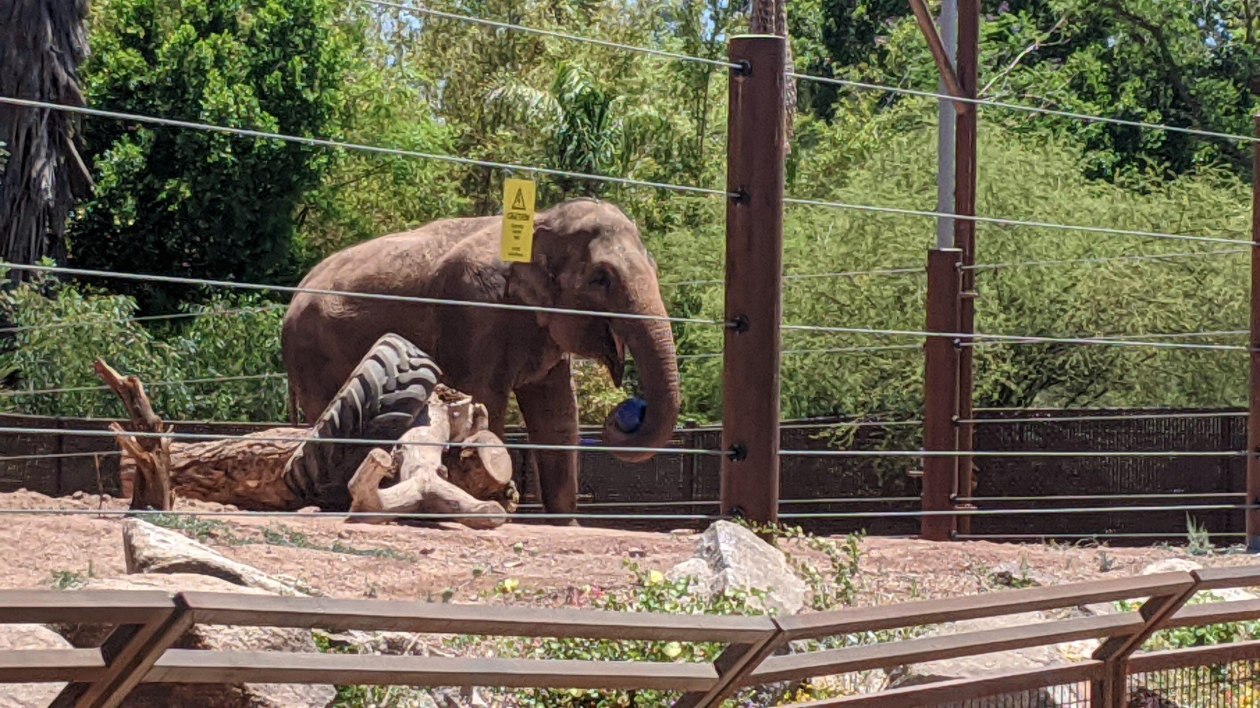 elephant-phoenix-zoo
