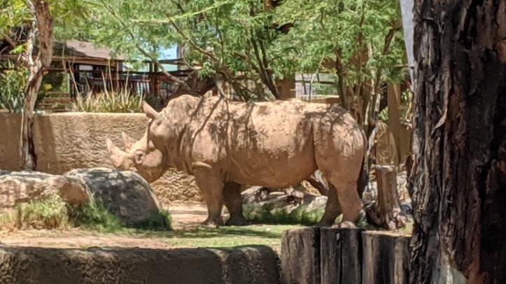 Phoenix-zoo-rhino